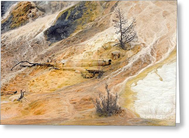 Mammoth Hot Springs Greeting Card by Charline Xia