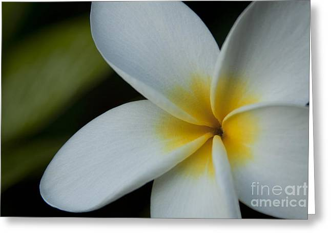 Mana I Ka Lani - Tropical Plumeria Hawaii Greeting Card by Sharon Mau