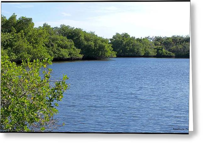Manatee Park Greeting Card by Vanessa Parent