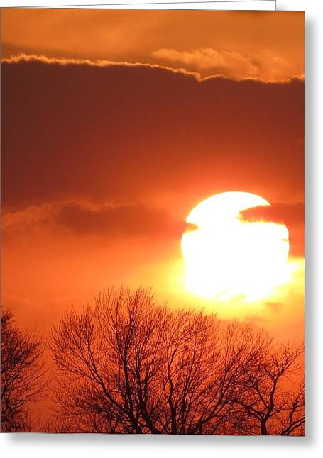 Mango Sunset Kansas Tree Silhouette Greeting Card by Rebecca Overton