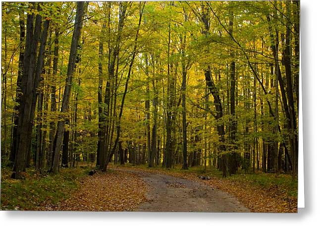 Manistee National Forest Greeting Card by Twenty Two North Photography