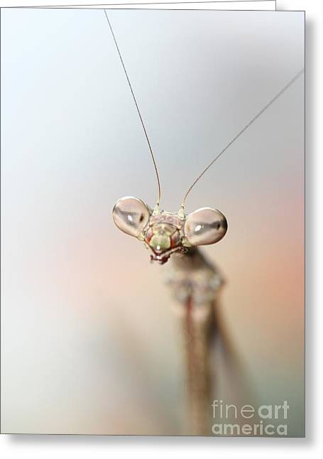 Mantis  Greeting Card by Gary Bridger