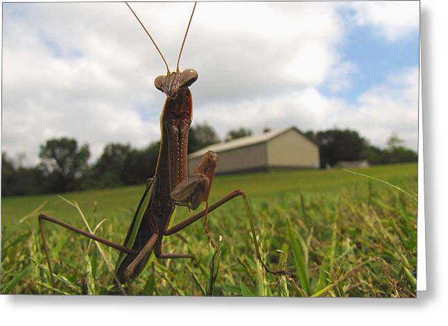 Greeting Card featuring the photograph Mantis by John Crothers