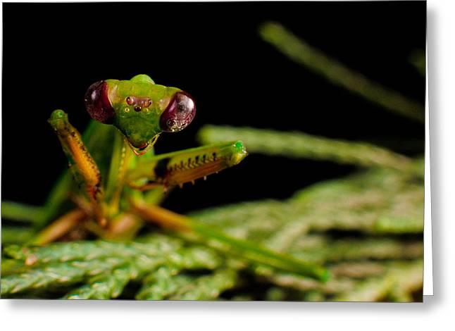 Mantis Greeting Card