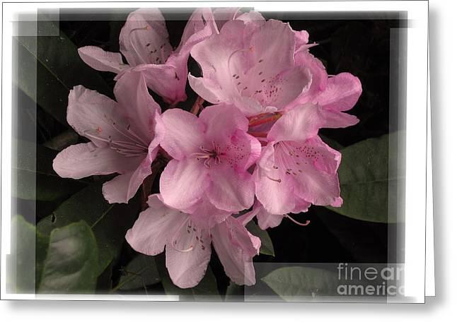 Many Splendored Blooms Greeting Card by Judee Stalmack