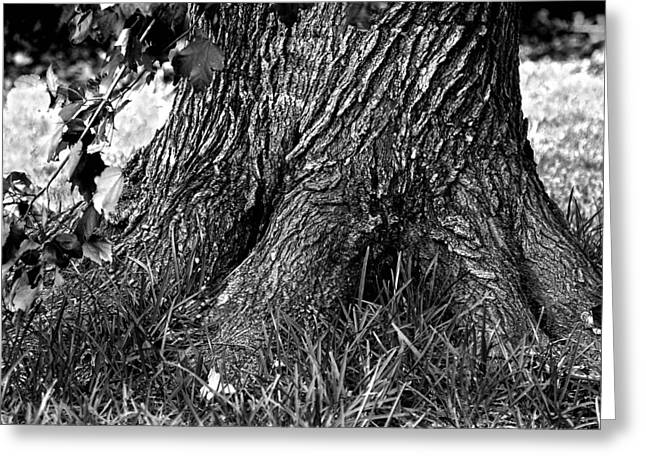 Greeting Card featuring the photograph Maple by Dan Wells