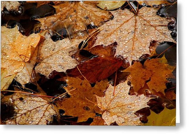 Maple Dew Drops Greeting Card