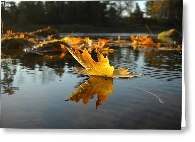 Maple Leaf Floating In River Greeting Card