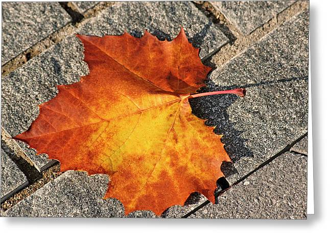 Maple Leaf In Fall Greeting Card by Carolyn Marshall