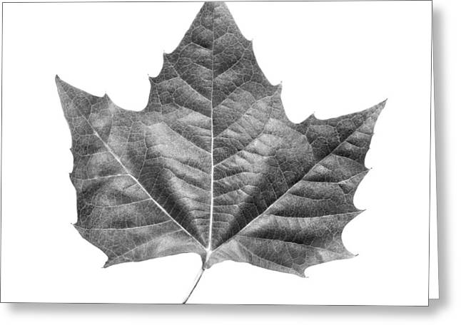 Maple Leaf Greeting Card