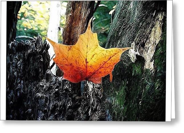 Maple Leaf Greeting Card by Natasha Marco