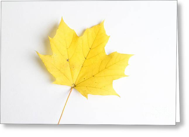 Maple Leaf Greeting Card by Photo Researchers