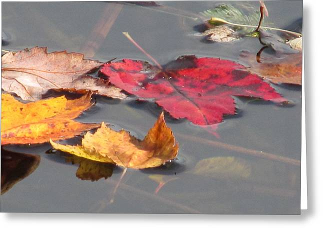 Maple Leaf Reflection Greeting Card