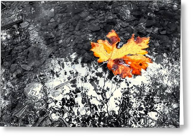Maple Leaf Selective Color Greeting Card