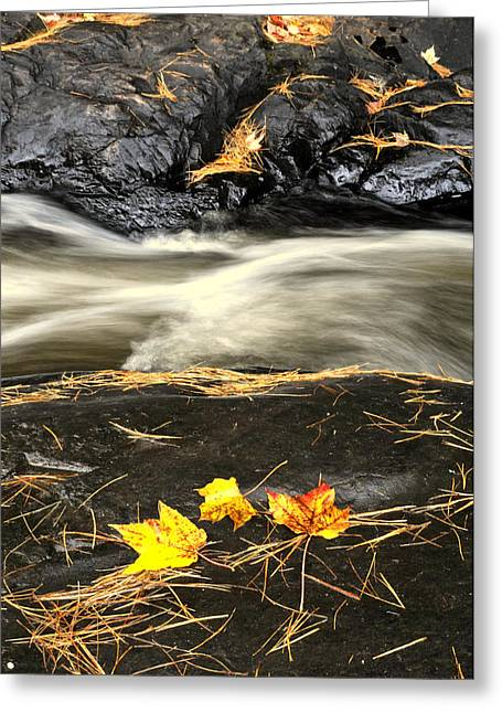 Maple Leaves And Water Greeting Card