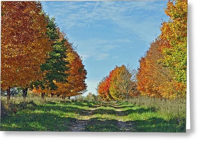 Maple Tree Lane Greeting Card by Rodney Campbell