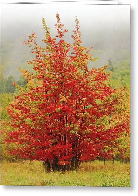 Maples In The Mist Greeting Card by Roupen  Baker