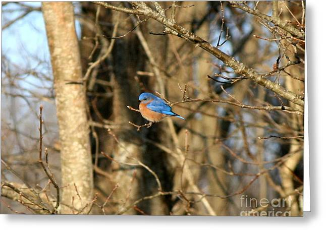 March Bluebird Greeting Card by Neal Eslinger