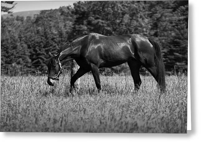 Greeting Card featuring the photograph Mare In Field by Davandra Cribbie