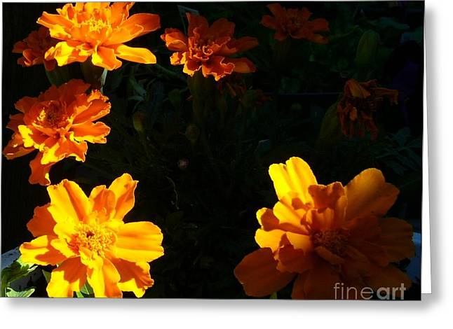 Greeting Card featuring the photograph Marigold Sunrise by Jim Sauchyn