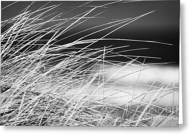 Marram Grass On Sand Dunes On Beach County Derry Londonderry Northern Ireland Uk Greeting Card
