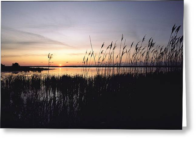 Marsh Grasses And Sunset Greeting Card