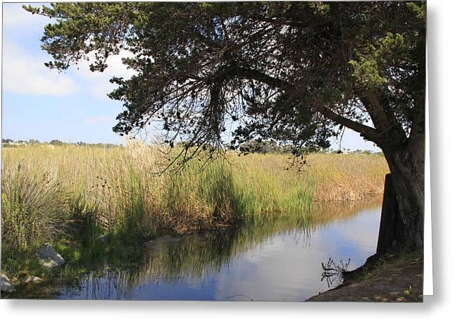 Greeting Card featuring the photograph Marsh Reflections by Jan Cipolla