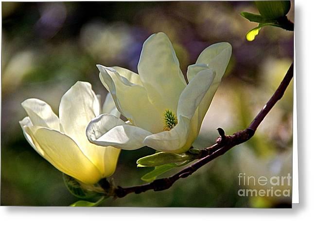 Marvelous Magnolia Greeting Card by Byron Varvarigos