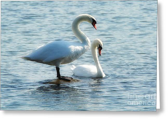 Mating Pair Greeting Card