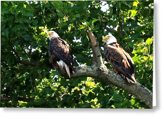 Greeting Card featuring the photograph Mating Pair by Randall Branham