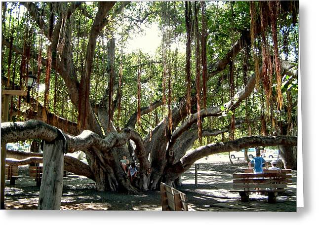 Maui Banyan Tree Park Greeting Card