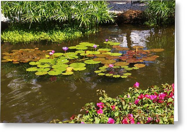 Maui Pond Greeting Card