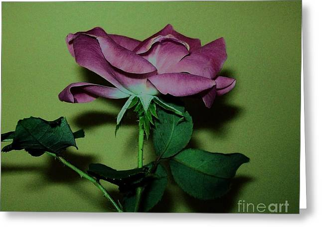 Mauve Rose Side View Greeting Card by Marsha Heiken