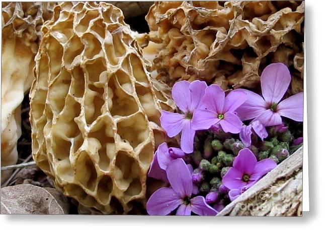 May Is For Morels Greeting Card by Timothy Myles