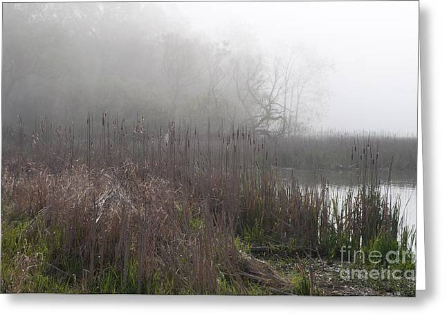 Mclaughlin Bay In The Fog Bulrushes Greeting Card by Gary Chapple