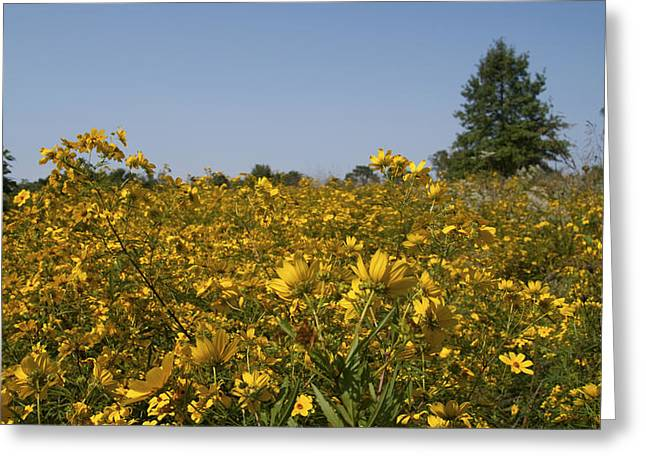 Meadow At Terapin Park Greeting Card by Charles Kraus