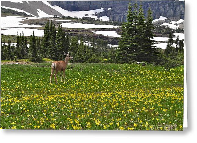 Greeting Card featuring the photograph Meadow Deer by Johanne Peale