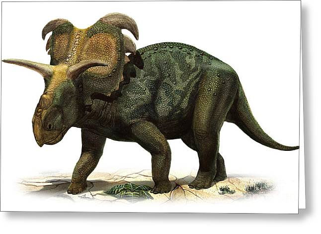 Medusaceratops Lokii, A Prehistoric Era Greeting Card by Sergey Krasovskiy