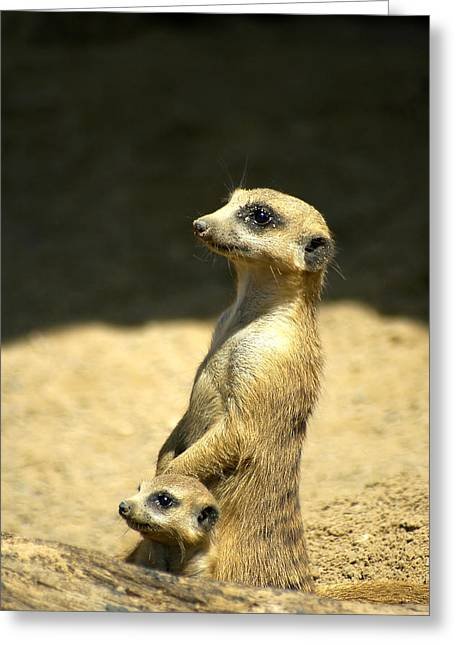 Meerkat Mother And Baby Greeting Card