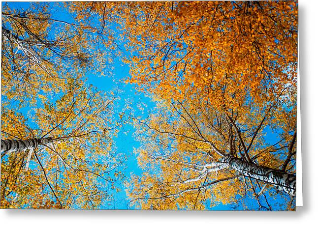 Meet In Heaven. Autumn Glory Greeting Card by Jenny Rainbow