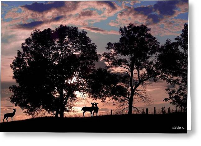 Meeting In The Sunset Greeting Card by Bill Stephens
