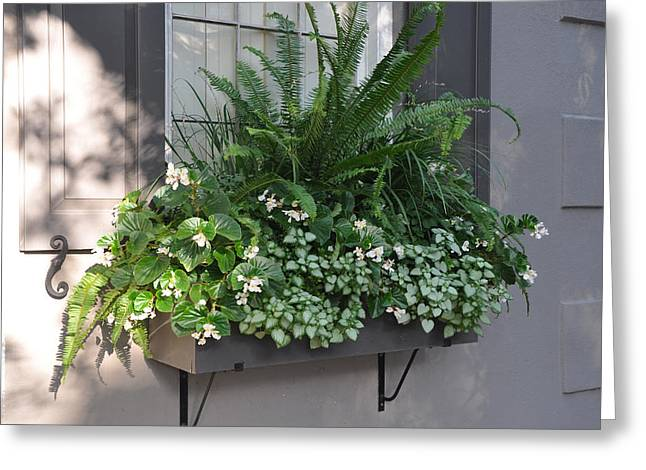 Meeting Street Window Box Greeting Card by Lori Kesten