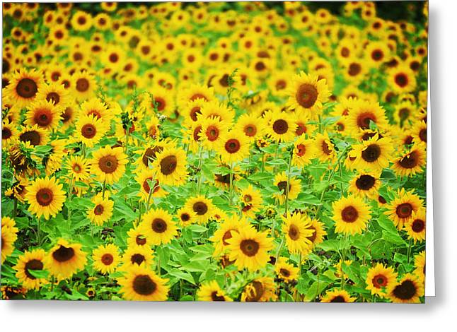Mellow Yello Greeting Card