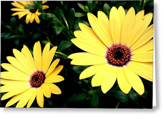 Mellow Yellow Greeting Card by Kevin D Davis