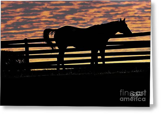 Memorial Day Weekend Sunset In Georgia - Horse - Artist Cris Hayes Greeting Card by Cris Hayes