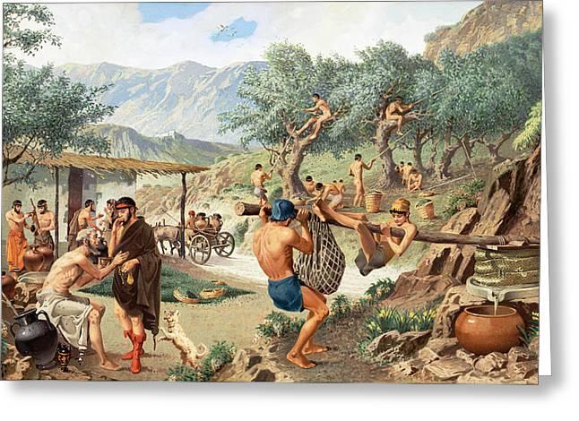 Men Harvest Olives And Press Greeting Card