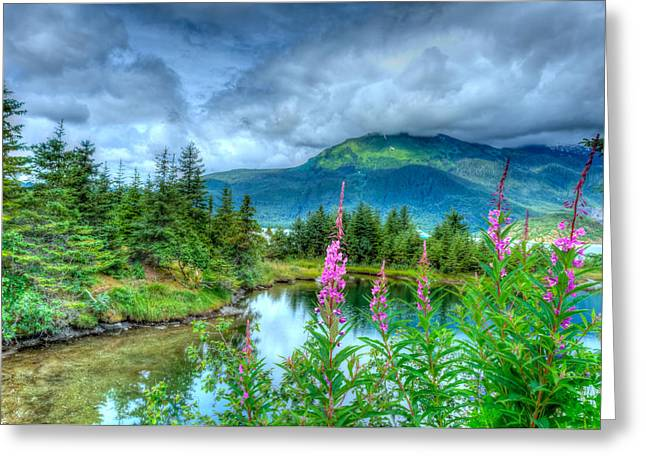 Mendenhall Fireweed Greeting Card by Don Mennig