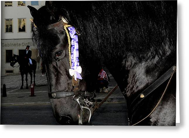 Greeting Card featuring the photograph Menorca Horse 2 by Pedro Cardona