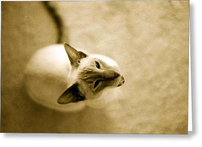 Greeting Card featuring the photograph Meow by Lenny Carter