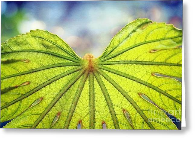 Metamorphosis Greeting Card by Ellen Cotton